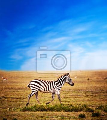 Постер Африканский пейзаж Зебра по Африканской саванне. Сафари в СеренгетиАфриканский пейзаж<br>Постер на холсте или бумаге. Любого нужного вам размера. В раме или без. Подвес в комплекте. Трехслойная надежная упаковка. Доставим в любую точку России. Вам осталось только повесить картину на стену!<br>