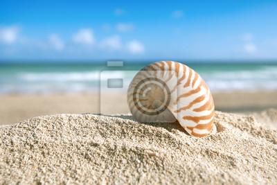 Наутилус  shell с океан , пляж и морской пейзаж, мелкие dof, 30x20 см, на бумагеКарибы<br>Постер на холсте или бумаге. Любого нужного вам размера. В раме или без. Подвес в комплекте. Трехслойная надежная упаковка. Доставим в любую точку России. Вам осталось только повесить картину на стену!<br>