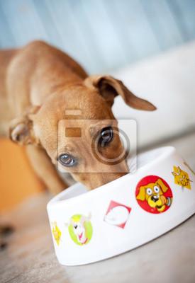 Постер Собаки Милые собакиСобаки<br>Постер на холсте или бумаге. Любого нужного вам размера. В раме или без. Подвес в комплекте. Трехслойная надежная упаковка. Доставим в любую точку России. Вам осталось только повесить картину на стену!<br>