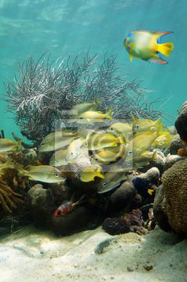 Постер Подводный мир Морское дно с косяк рыб в коралловых рифов, 20x30 см, на бумагеРыбы<br>Постер на холсте или бумаге. Любого нужного вам размера. В раме или без. Подвес в комплекте. Трехслойная надежная упаковка. Доставим в любую точку России. Вам осталось только повесить картину на стену!<br>
