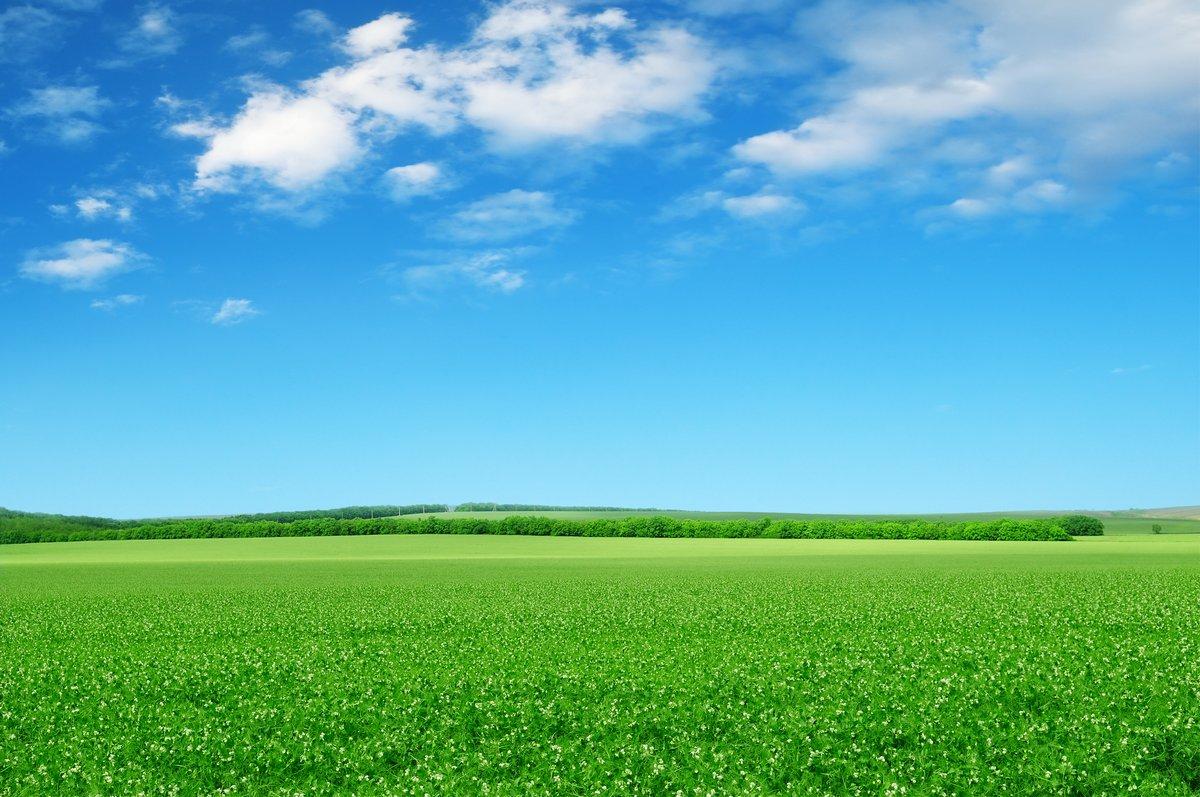 Постер Пейзаж равнинный Красивые цветущие поля,Пейзаж равнинный<br>Постер на холсте или бумаге. Любого нужного вам размера. В раме или без. Подвес в комплекте. Трехслойная надежная упаковка. Доставим в любую точку России. Вам осталось только повесить картину на стену!<br>