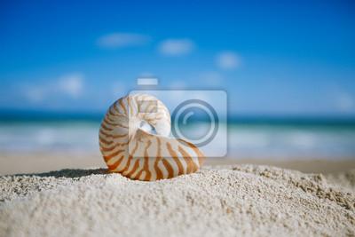 Постер Ракушки Наутилус  shell с океан , пляж и морской пейзаж, мелкие dofРакушки<br>Постер на холсте или бумаге. Любого нужного вам размера. В раме или без. Подвес в комплекте. Трехслойная надежная упаковка. Доставим в любую точку России. Вам осталось только повесить картину на стену!<br>