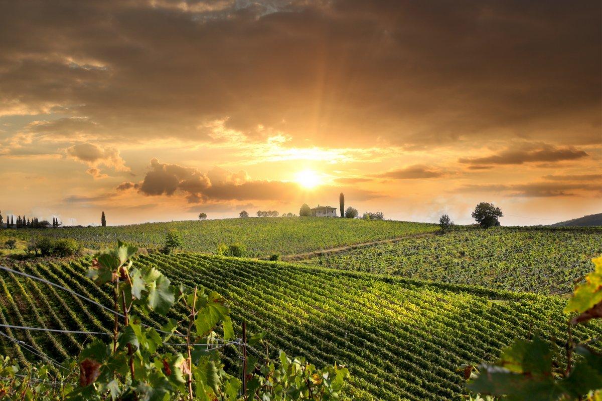 Постер Италия Кьянти виноградник пейзаж в Тоскане, ИталияИталия<br>Постер на холсте или бумаге. Любого нужного вам размера. В раме или без. Подвес в комплекте. Трехслойная надежная упаковка. Доставим в любую точку России. Вам осталось только повесить картину на стену!<br>