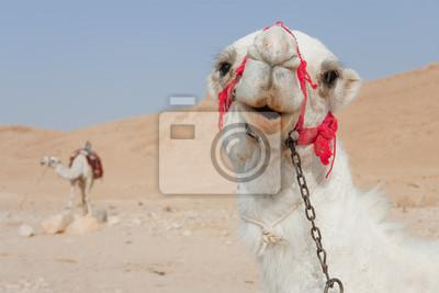 Постер Сирия Верблюды в Пальмира, СирияСирия<br>Постер на холсте или бумаге. Любого нужного вам размера. В раме или без. Подвес в комплекте. Трехслойная надежная упаковка. Доставим в любую точку России. Вам осталось только повесить картину на стену!<br>