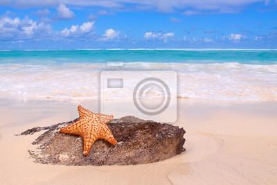Морские звезды на тропическом пляже. , 30x20 см, на бумагеКарибы<br>Постер на холсте или бумаге. Любого нужного вам размера. В раме или без. Подвес в комплекте. Трехслойная надежная упаковка. Доставим в любую точку России. Вам осталось только повесить картину на стену!<br>