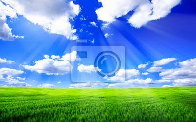 Постер Пейзаж равнинный Красивый весенний пейзажПейзаж равнинный<br>Постер на холсте или бумаге. Любого нужного вам размера. В раме или без. Подвес в комплекте. Трехслойная надежная упаковка. Доставим в любую точку России. Вам осталось только повесить картину на стену!<br>