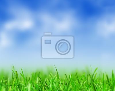Постер Пейзаж равнинный Зеленая трава и синее небоПейзаж равнинный<br>Постер на холсте или бумаге. Любого нужного вам размера. В раме или без. Подвес в комплекте. Трехслойная надежная упаковка. Доставим в любую точку России. Вам осталось только повесить картину на стену!<br>