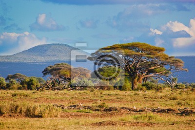Постер Африканский пейзаж Саванна пейзаж в Африке, Амбосели, КенияАфриканский пейзаж<br>Постер на холсте или бумаге. Любого нужного вам размера. В раме или без. Подвес в комплекте. Трехслойная надежная упаковка. Доставим в любую точку России. Вам осталось только повесить картину на стену!<br>