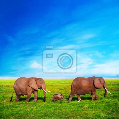 Постер Африканский пейзаж Слоны. Сафари в Амбосели, Кения, АфрикаАфриканский пейзаж<br>Постер на холсте или бумаге. Любого нужного вам размера. В раме или без. Подвес в комплекте. Трехслойная надежная упаковка. Доставим в любую точку России. Вам осталось только повесить картину на стену!<br>