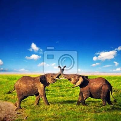 Постер Африканский пейзаж Слоны играют в саванне. Сафари в Амбосели, Кения, АфрикаАфриканский пейзаж<br>Постер на холсте или бумаге. Любого нужного вам размера. В раме или без. Подвес в комплекте. Трехслойная надежная упаковка. Доставим в любую точку России. Вам осталось только повесить картину на стену!<br>