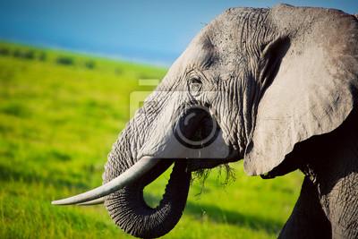 Постер Африканский пейзаж Слон по саванне. Сафари в Амбосели, Кения, АфрикаПостер на холсте или бумаге. Любого нужного вам размера. В раме или без. Подвес в комплекте. Трехслойная надежная упаковка. Доставим в любую точку России. Вам осталось только повесить картину на стену!<br>