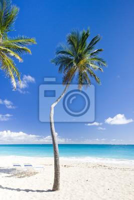 Постер Карибы Дно Залива, Барбадос, Карибского БассейнаКарибы<br>Постер на холсте или бумаге. Любого нужного вам размера. В раме или без. Подвес в комплекте. Трехслойная надежная упаковка. Доставим в любую точку России. Вам осталось только повесить картину на стену!<br>