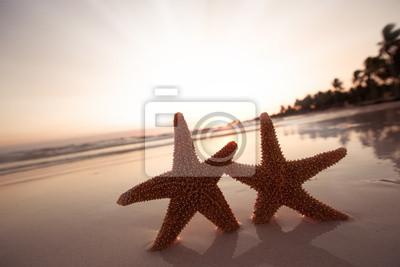 Постер Карибы Морская звезда морская звезда Силуэт на sunrise beach, мелкие dofКарибы<br>Постер на холсте или бумаге. Любого нужного вам размера. В раме или без. Подвес в комплекте. Трехслойная надежная упаковка. Доставим в любую точку России. Вам осталось только повесить картину на стену!<br>