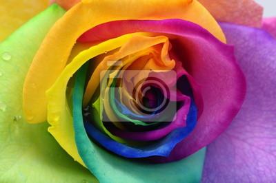 Постер Розы Крупным планом Радуга розовое сердцеРозы<br>Постер на холсте или бумаге. Любого нужного вам размера. В раме или без. Подвес в комплекте. Трехслойная надежная упаковка. Доставим в любую точку России. Вам осталось только повесить картину на стену!<br>