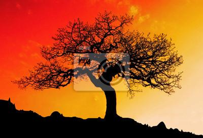 Постер Австралия Только дерево с солнцем и цвет красный оранжевый желтый небоАвстралия<br>Постер на холсте или бумаге. Любого нужного вам размера. В раме или без. Подвес в комплекте. Трехслойная надежная упаковка. Доставим в любую точку России. Вам осталось только повесить картину на стену!<br>