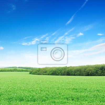 Постер Пейзаж равнинный Цветущие поля и ярко-синее небоПейзаж равнинный<br>Постер на холсте или бумаге. Любого нужного вам размера. В раме или без. Подвес в комплекте. Трехслойная надежная упаковка. Доставим в любую точку России. Вам осталось только повесить картину на стену!<br>