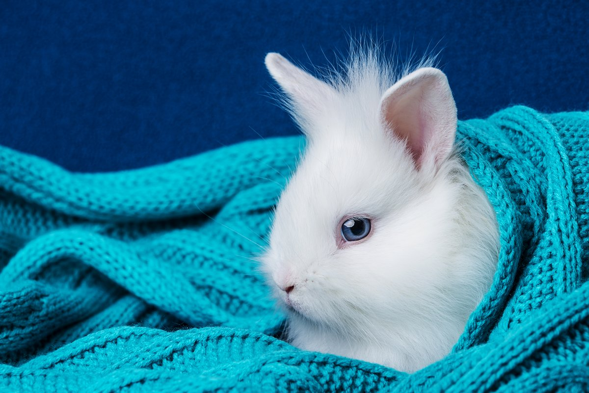 Маленький симпатичный белый кролик в мягкий шарф, 30x20 см, на бумагеКролики<br>Постер на холсте или бумаге. Любого нужного вам размера. В раме или без. Подвес в комплекте. Трехслойная надежная упаковка. Доставим в любую точку России. Вам осталось только повесить картину на стену!<br>