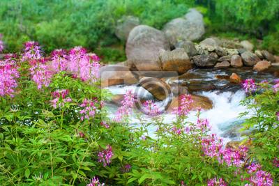 Постер Непал Красивые розовые цветы на фоне гор s рекиНепал<br>Постер на холсте или бумаге. Любого нужного вам размера. В раме или без. Подвес в комплекте. Трехслойная надежная упаковка. Доставим в любую точку России. Вам осталось только повесить картину на стену!<br>