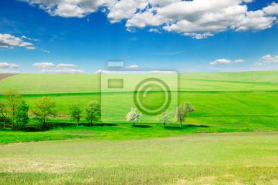 Постер Пейзаж равнинный Зеленый лугПейзаж равнинный<br>Постер на холсте или бумаге. Любого нужного вам размера. В раме или без. Подвес в комплекте. Трехслойная надежная упаковка. Доставим в любую точку России. Вам осталось только повесить картину на стену!<br>