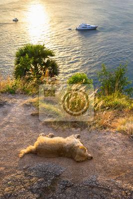 Постер Таиланд Закат на острове Пхукет. Собака спит на пляжеТаиланд<br>Постер на холсте или бумаге. Любого нужного вам размера. В раме или без. Подвес в комплекте. Трехслойная надежная упаковка. Доставим в любую точку России. Вам осталось только повесить картину на стену!<br>