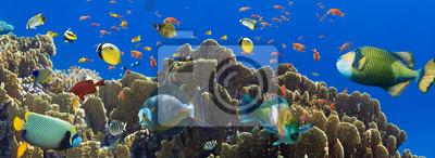 Постер Карибы Кораллы и рыбыКарибы<br>Постер на холсте или бумаге. Любого нужного вам размера. В раме или без. Подвес в комплекте. Трехслойная надежная упаковка. Доставим в любую точку России. Вам осталось только повесить картину на стену!<br>