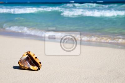 Постер Гавайи Раковина на пляжеГавайи<br>Постер на холсте или бумаге. Любого нужного вам размера. В раме или без. Подвес в комплекте. Трехслойная надежная упаковка. Доставим в любую точку России. Вам осталось только повесить картину на стену!<br>