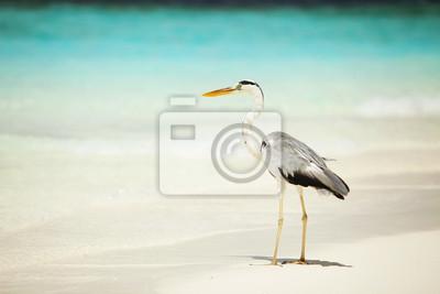 Постер Пейзаж песчаный