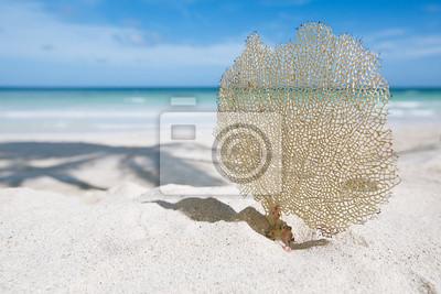 Постер Куба Море веселья и морские звезды на Солнечный пляж с моря на фонеКуба<br>Постер на холсте или бумаге. Любого нужного вам размера. В раме или без. Подвес в комплекте. Трехслойная надежная упаковка. Доставим в любую точку России. Вам осталось только повесить картину на стену!<br>
