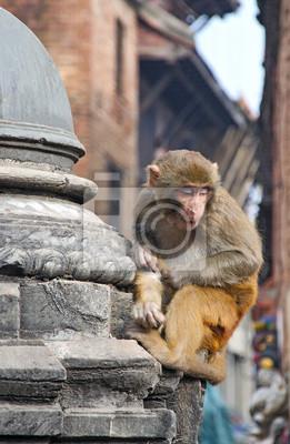 Постер Непал Сидит обезьяна на swayambhunath ступа в Катманду, НепалНепал<br>Постер на холсте или бумаге. Любого нужного вам размера. В раме или без. Подвес в комплекте. Трехслойная надежная упаковка. Доставим в любую точку России. Вам осталось только повесить картину на стену!<br>