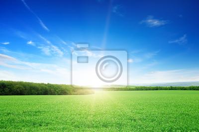Постер Пейзаж равнинный Восход солнца над зеленым полемПейзаж равнинный<br>Постер на холсте или бумаге. Любого нужного вам размера. В раме или без. Подвес в комплекте. Трехслойная надежная упаковка. Доставим в любую точку России. Вам осталось только повесить картину на стену!<br>