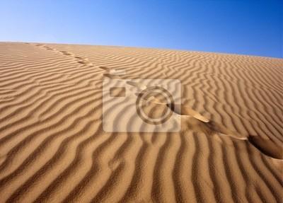 Постер Пейзаж песчаный Песчаная пустыня, сахара, ТунисПейзаж песчаный<br>Постер на холсте или бумаге. Любого нужного вам размера. В раме или без. Подвес в комплекте. Трехслойная надежная упаковка. Доставим в любую точку России. Вам осталось только повесить картину на стену!<br>