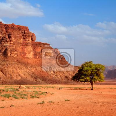 Постер Пейзаж песчаный Дерево в пустыне - квадратПейзаж песчаный<br>Постер на холсте или бумаге. Любого нужного вам размера. В раме или без. Подвес в комплекте. Трехслойная надежная упаковка. Доставим в любую точку России. Вам осталось только повесить картину на стену!<br>