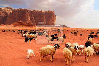 Постер Пейзаж песчаный Стадо бедуинов, овец и козПейзаж песчаный<br>Постер на холсте или бумаге. Любого нужного вам размера. В раме или без. Подвес в комплекте. Трехслойная надежная упаковка. Доставим в любую точку России. Вам осталось только повесить картину на стену!<br>