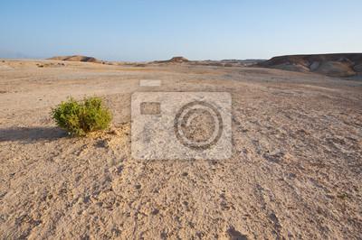Постер Пейзаж песчаный Буш в ПустынеПейзаж песчаный<br>Постер на холсте или бумаге. Любого нужного вам размера. В раме или без. Подвес в комплекте. Трехслойная надежная упаковка. Доставим в любую точку России. Вам осталось только повесить картину на стену!<br>