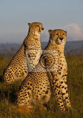 Постер Кения Африканских гепардов 4534Кения<br>Постер на холсте или бумаге. Любого нужного вам размера. В раме или без. Подвес в комплекте. Трехслойная надежная упаковка. Доставим в любую точку России. Вам осталось только повесить картину на стену!<br>