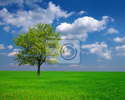 Постер Пейзаж равнинный Красивых зеленых деревьев, среди полейПейзаж равнинный<br>Постер на холсте или бумаге. Любого нужного вам размера. В раме или без. Подвес в комплекте. Трехслойная надежная упаковка. Доставим в любую точку России. Вам осталось только повесить картину на стену!<br>
