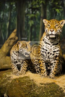 Постер Животные Jaguar Семьи, 20x30 см, на бумагеЯгуары<br>Постер на холсте или бумаге. Любого нужного вам размера. В раме или без. Подвес в комплекте. Трехслойная надежная упаковка. Доставим в любую точку России. Вам осталось только повесить картину на стену!<br>