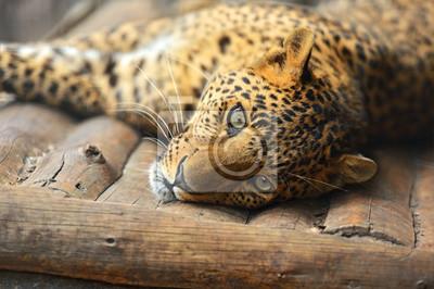 Постер Животные Портрет leopard, 30x20 см, на бумагеЯгуары<br>Постер на холсте или бумаге. Любого нужного вам размера. В раме или без. Подвес в комплекте. Трехслойная надежная упаковка. Доставим в любую точку России. Вам осталось только повесить картину на стену!<br>
