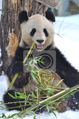 Постер Панда PandaПанда<br>Постер на холсте или бумаге. Любого нужного вам размера. В раме или без. Подвес в комплекте. Трехслойная надежная упаковка. Доставим в любую точку России. Вам осталось только повесить картину на стену!<br>