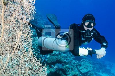 Постер Спорт Scuba diver с большим поклонником кораллы в океане, 30x20 см, на бумагеДайвинг<br>Постер на холсте или бумаге. Любого нужного вам размера. В раме или без. Подвес в комплекте. Трехслойная надежная упаковка. Доставим в любую точку России. Вам осталось только повесить картину на стену!<br>