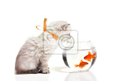 Постер Кошки Маленький котенок и золотая рыбкаКошки<br>Постер на холсте или бумаге. Любого нужного вам размера. В раме или без. Подвес в комплекте. Трехслойная надежная упаковка. Доставим в любую точку России. Вам осталось только повесить картину на стену!<br>