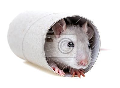 Мышка играть - пряча в бумажный рулон., 27x20 см, на бумагеМыши<br>Постер на холсте или бумаге. Любого нужного вам размера. В раме или без. Подвес в комплекте. Трехслойная надежная упаковка. Доставим в любую точку России. Вам осталось только повесить картину на стену!<br>