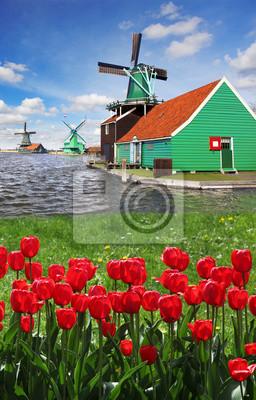 Постер Архитектура Ветряные мельницы против красных тюльпанов в Нидерландах, заансе Сханс, 20x31 см, на бумагеМельницы<br>Постер на холсте или бумаге. Любого нужного вам размера. В раме или без. Подвес в комплекте. Трехслойная надежная упаковка. Доставим в любую точку России. Вам осталось только повесить картину на стену!<br>