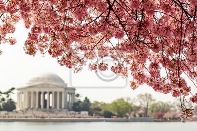 Постер Вашингтон Cherry blossom над Мемориал Джефферсона в Вашингтоне, округ КолумбияВашингтон<br>Постер на холсте или бумаге. Любого нужного вам размера. В раме или без. Подвес в комплекте. Трехслойная надежная упаковка. Доставим в любую точку России. Вам осталось только повесить картину на стену!<br>