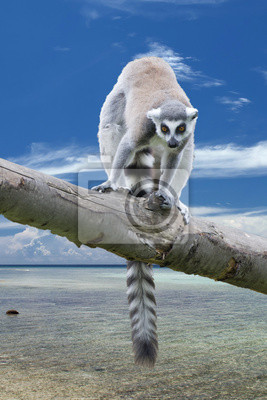 Постер Животные Изолированные Lemur Обезьяна на фоне Мадагаскар, 20x30 см, на бумагеЛемуры<br>Постер на холсте или бумаге. Любого нужного вам размера. В раме или без. Подвес в комплекте. Трехслойная надежная упаковка. Доставим в любую точку России. Вам осталось только повесить картину на стену!<br>