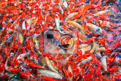 Постер Животные Кои рыб или Карпов, 30x20 см, на бумагеРыбы - японский карп<br>Постер на холсте или бумаге. Любого нужного вам размера. В раме или без. Подвес в комплекте. Трехслойная надежная упаковка. Доставим в любую точку России. Вам осталось только повесить картину на стену!<br>