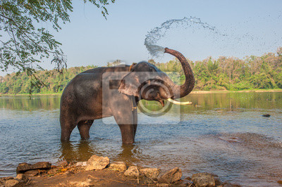 Постер Животные Слона купать, Керала, Индия, 30x20 см, на бумагеСлоны<br>Постер на холсте или бумаге. Любого нужного вам размера. В раме или без. Подвес в комплекте. Трехслойная надежная упаковка. Доставим в любую точку России. Вам осталось только повесить картину на стену!<br>