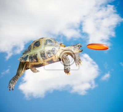 Постер Рептилии Черепаха ловит фризбиРептилии<br>Постер на холсте или бумаге. Любого нужного вам размера. В раме или без. Подвес в комплекте. Трехслойная надежная упаковка. Доставим в любую точку России. Вам осталось только повесить картину на стену!<br>