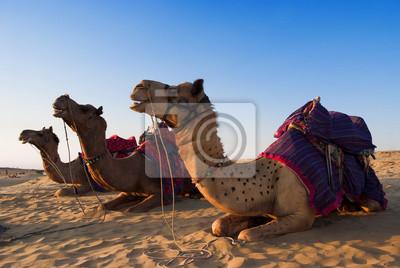 Постер Животные Camel для верховой езды деятельность в Индии, 30x20 см, на бумагеВерблюды<br>Постер на холсте или бумаге. Любого нужного вам размера. В раме или без. Подвес в комплекте. Трехслойная надежная упаковка. Доставим в любую точку России. Вам осталось только повесить картину на стену!<br>