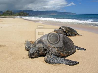 Постер Рептилии Две черепахи в песок на пляже на ГавайяхРептилии<br>Постер на холсте или бумаге. Любого нужного вам размера. В раме или без. Подвес в комплекте. Трехслойная надежная упаковка. Доставим в любую точку России. Вам осталось только повесить картину на стену!<br>